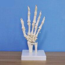 Жизнь Размеры человеческой руки сустава анатомическая медицинская модель скелета науки здорового образа жизни полезно для медицинского учебные принадлежности