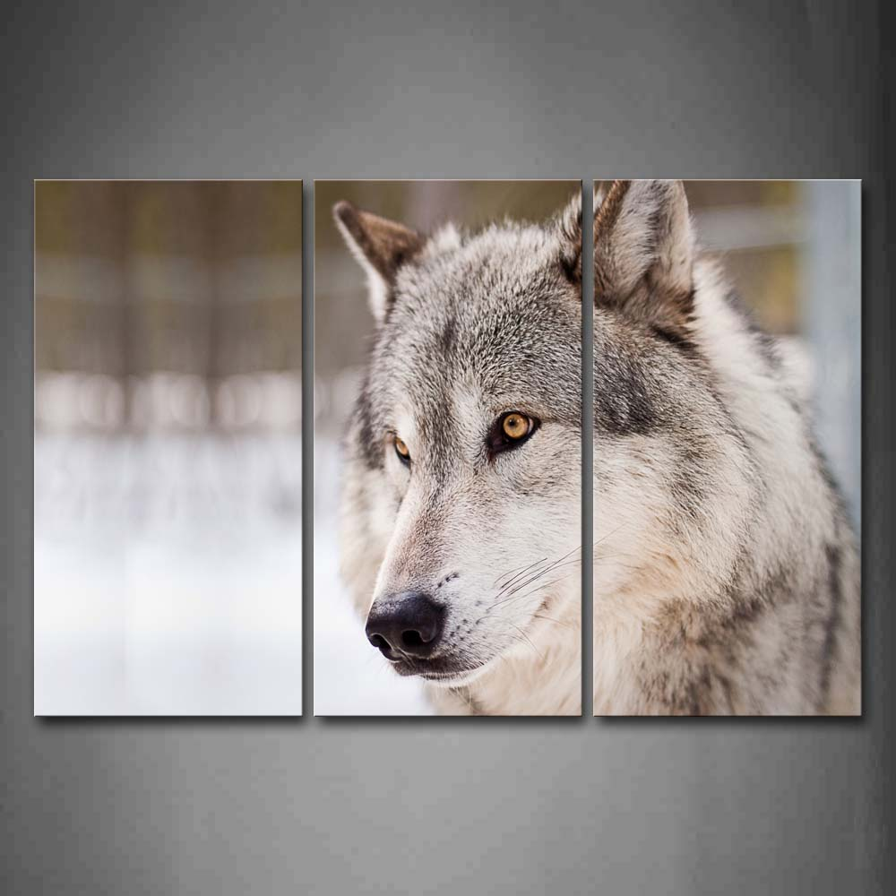 Framed Wall Art Pictures Gray Wolf Canvas Print Animal Modern Poster With Wooden Frame For Living Room Home Office DecorFramed Wall Art Pictures Gray Wolf Canvas Print Animal Modern Poster With Wooden Frame For Living Room Home Office Decor