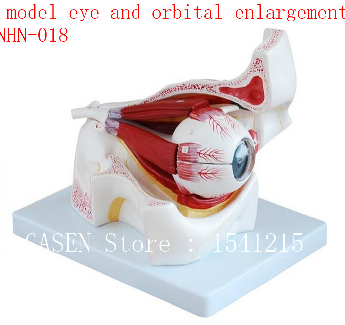 Anatomical eyes Extraocular muscle model Teaching medicine Eyeball model eye and orbital enlargement model - GASENHN-018 models atomic orbital of ethylene molecular modeling chemistry teaching supplies