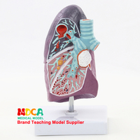 MFB001 Medical Teaching of Pulmonary Structural Models in Respiratory Department of Pulmonary Anatomy