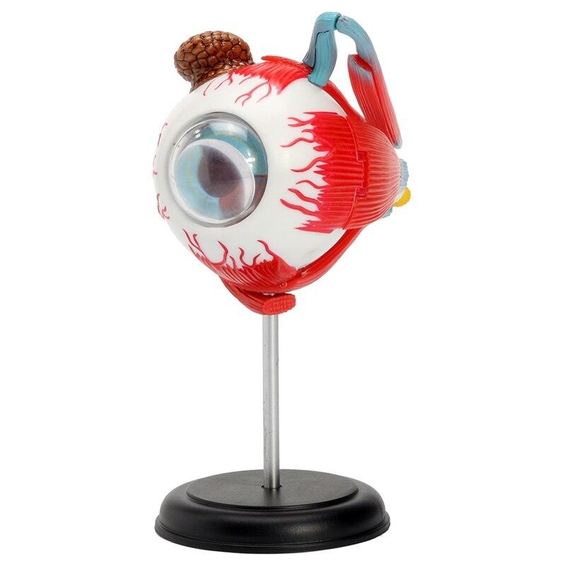 4d ojo humano anatómico modelo ensamblado Anatomía Humana modelo ojo ...
