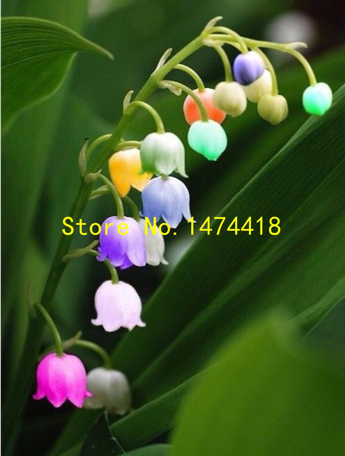 White lily of the valley flower convallaria majalis seeds rich aroma white lily of the valley flower convallaria majalis seeds rich aroma bonsai flower seed and beautiful 100 particles lot in bonsai from home garden on izmirmasajfo