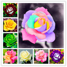 200 Pcs/Lot Rose Flower Bonsai Plants 24 Kinds of Color Europe Tree Potted Planting for Home Garden Decoration