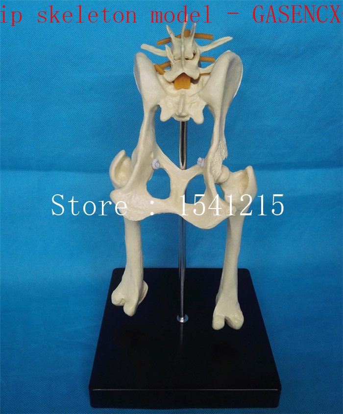 Animal skeleton model Animal Anatomy Model Veterinary specimens Dog hip skeleton model - GASENCX-0075 shunzaor dog ear lesion anatomical model animal model animal veterinary science medical teaching aids medical research model