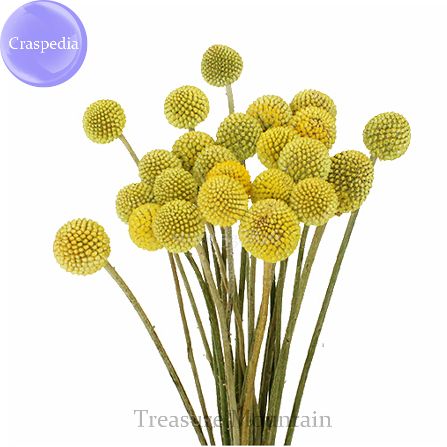 Buy Billy Ball Flowers And Get Free Shipping On Aliexpress