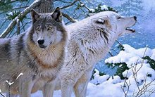 fantasy original art artistic artwork wolf wolves couple snow trees winter   4′ Size Home Decoration Canvas Poster Print