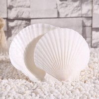 Free Shipping(5pcs/lot)Big White Scallop Natural Shell&Conch Home Decoration Aquarium Landscaping Wedding Landscape Decoration