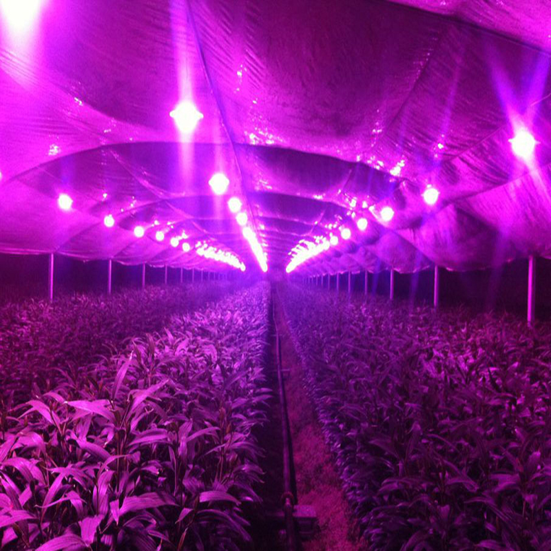 Diy 50w 100w Full Spectrum Hydroponics Led Grow Light With Full Kits For  Medical Plant,Greenhouse Hydroponics Systems,bloom In LED Grow Lights From  Lights ...