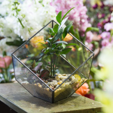 bonsai Doprava zdarma 15cm Polyhedron čirý skleněný box stolní sukulentní rostlina mikro terén terárium