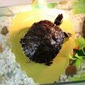 2016 novo produto réptil tartaruga tartaruga sol grande de alta qualidade atmosfera e prático , Kingpet