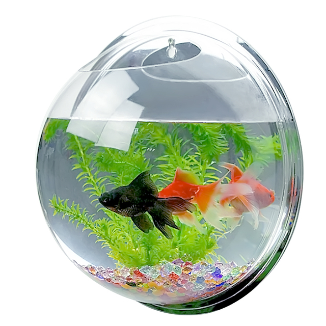 Behokic dia 15cm mini acrylic round wall mounted hanging for Fish bowl pets