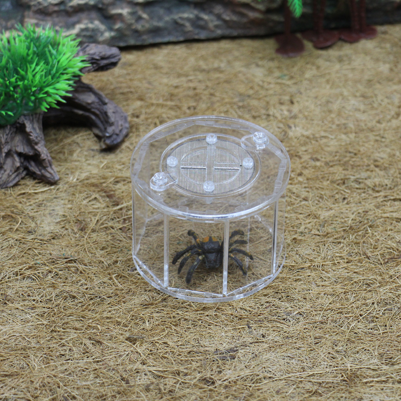 ant grape 8 sides pet spider ant farm, acrylic assembled reptile breeding box Ant spider scorpion climbed pet escape burrow nest