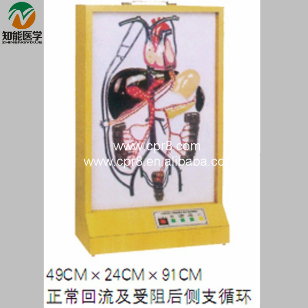 BIX-A1079 Electric Portal Collateral Circulation Model  G156 bix a1079 electric portal collateral circulation model g156