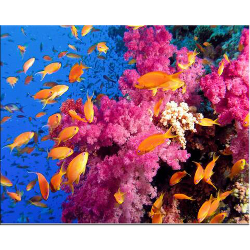 Full 5D Coral Fish School Diamond Painting Landscape Arts Crafts Hobby Decoration Round  ...