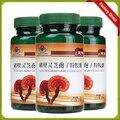 Ganoderma Lucidum, Lingzhi, selvagens reishi Esporo Em Pó, medicina chinesa ervas, Anti-câncer e anti-envelhecimento