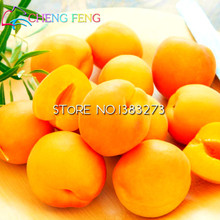 10pcs Apricot Tree Seed High Survival Rate Bonsai Fruit Vegetable Seeds Very Delicious Sweet Easy Grow For Home Garden Free Ship
