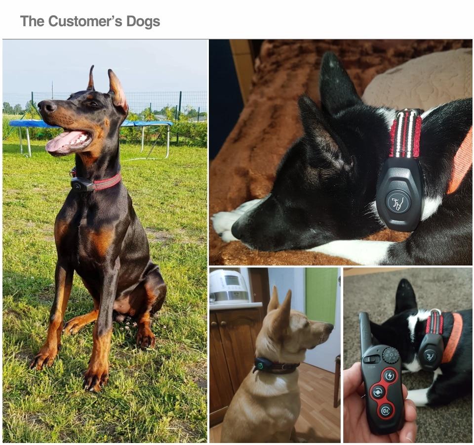 0 Dog training & anti bark DB400