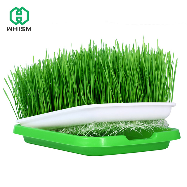 Whism Germination Grow Box Nursery Tray Seed Pot Flower Plant Garden Sprout Plate Seeding Case