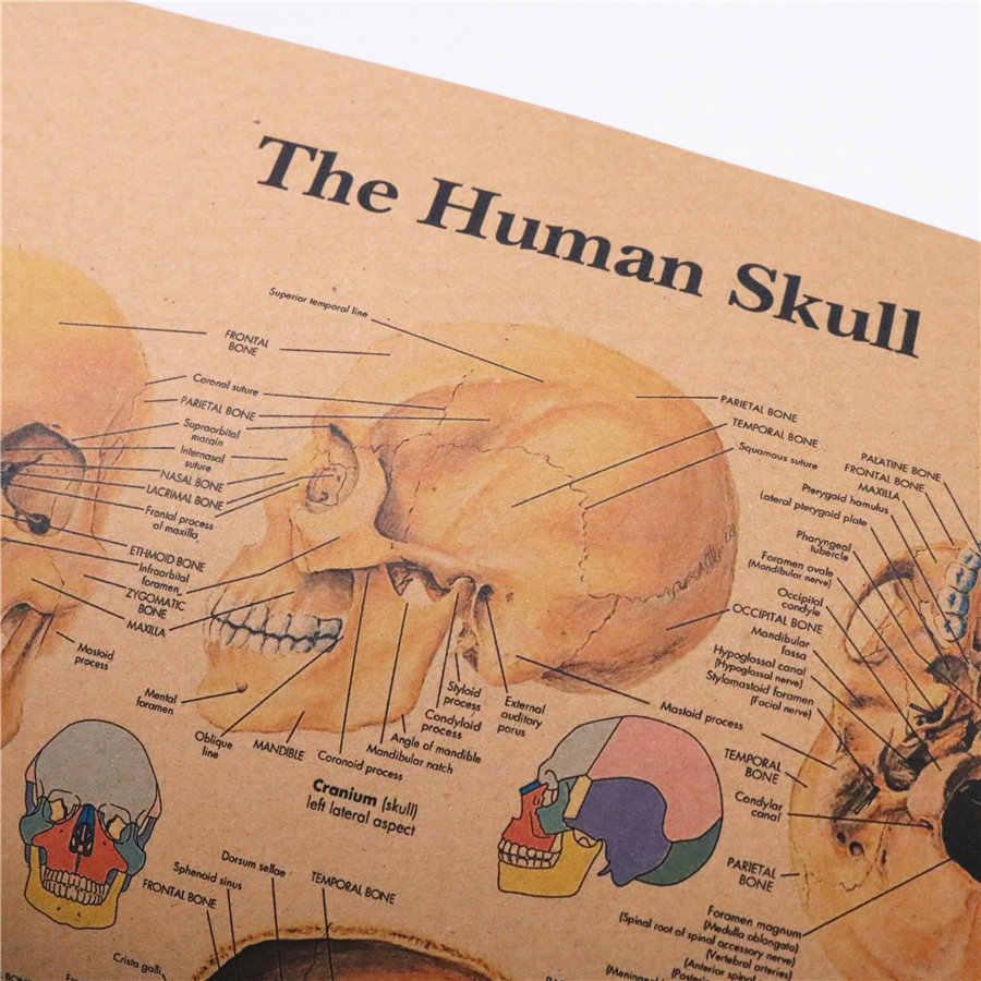 El hueso de la cabeza humana anatomía estructural Vintage kraft papel póster pared pegatina impresión pintura decoración del hogar 42x30 cm