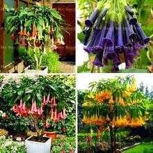 100Pcs/Bag Bonsai flower plant Brugmansia Datura Rare Flower Potted Plants Angels Trumpets For Home Garden