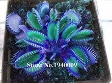 Insectivorous venus dionaea muscipula flytrap potted rare plant bonsai blue seeds