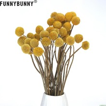 FUNNYBUNNY 5PCS Dried Craspedia Yellow Billy Balls Flowers For Wedding Bouquet Decor Christmas Wreath DIY