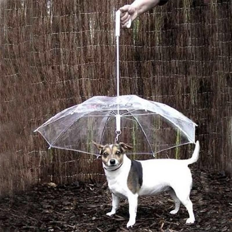 Pet Umbrellas hyena artifact Teddy bear dog pet Rain Gear lovely pet supplies waterproof cat dog umbrella free shipping salePet Umbrellas hyena artifact Teddy bear dog pet Rain Gear lovely pet supplies waterproof cat dog umbrella free shipping sale