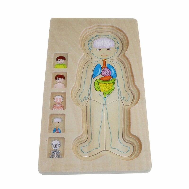 Montessori Children Educational Toys Wooden Human Body Puzzle Boys
