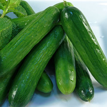 Fruit cucumber plant vegetable tree bonsai Organic sweet and delicious for home garden