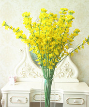 buy canola flower and get free shipping on aliexpress com