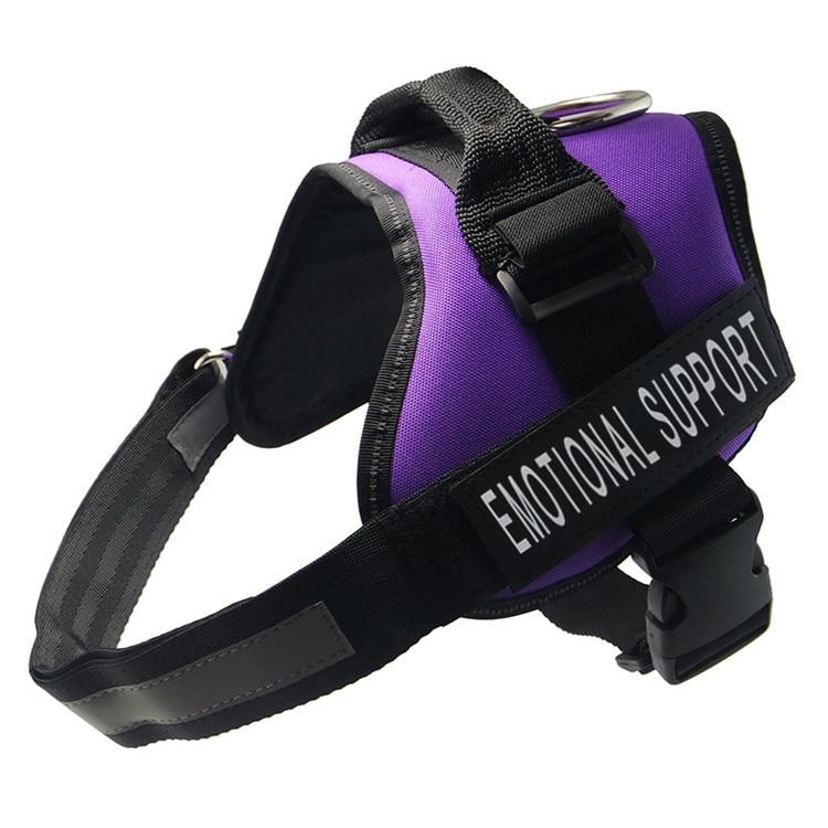 purpleems
