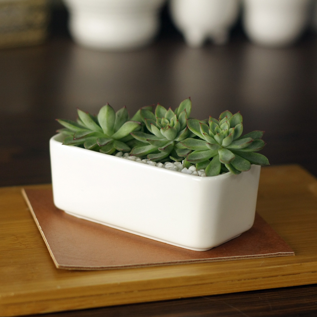 11cm * 5.5cm * 4.3cm Creativo simple blanco mini potted suculentas - Productos de jardín