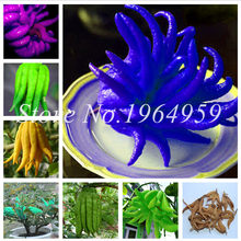 100 Pcs Bergamot Bonsai, Family Vegetable Pots,Gold Buddha Hand, Purify Air,Outdoor Yellow Gold Melon Good Tasty Succulent Fruit(China)