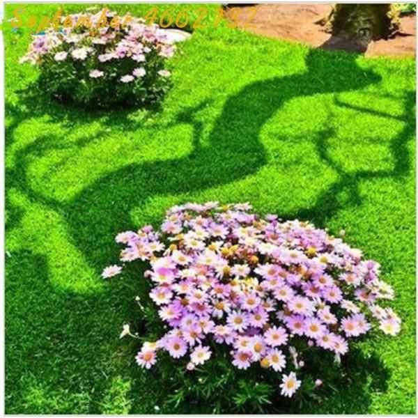 Лидер продаж! 500 шт. Японский лес трава газон, многолетний вечнозеленый газон Бонсай завод, красивый сад декоративные растения