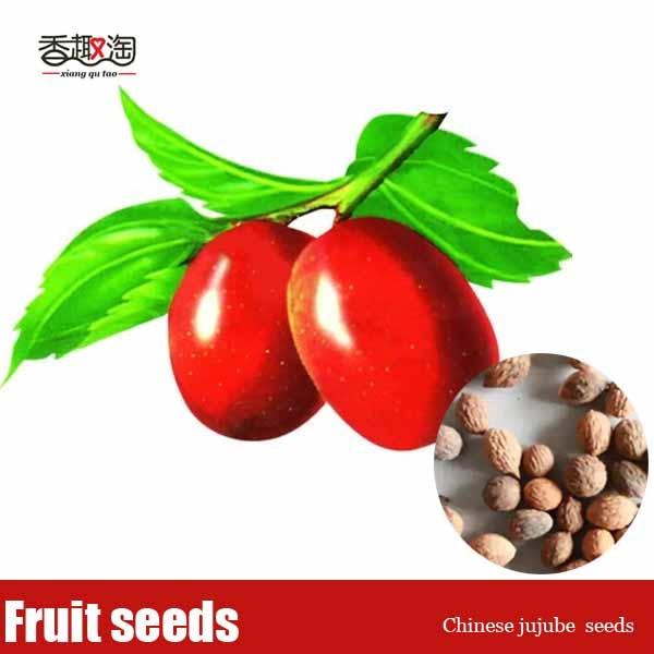 calories in fruit jujube fruit