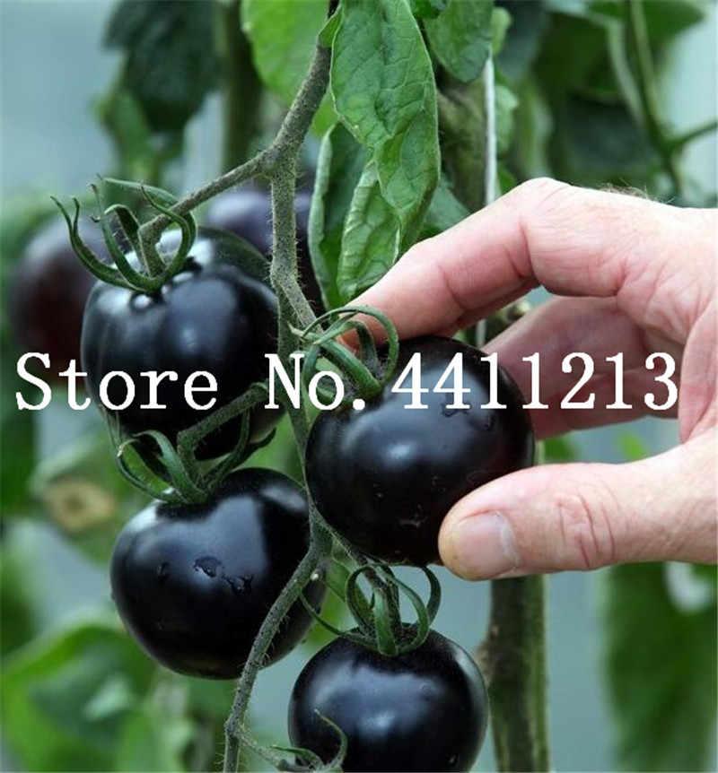 شحن مجاني 100 قطع نادر المستوردة قوس قزح الطماطم بونساي الفاكهة والخضار غير المعدلة وراثيا بوعاء النباتات الإنبات معدل 95%