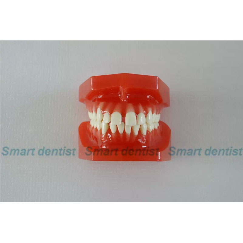 2016 Denture Dental Orthodontic Model Model 24 tooth 1 pc dental orthodontic study model transparent teeth malocclusion orthodontic model with colorful brackets