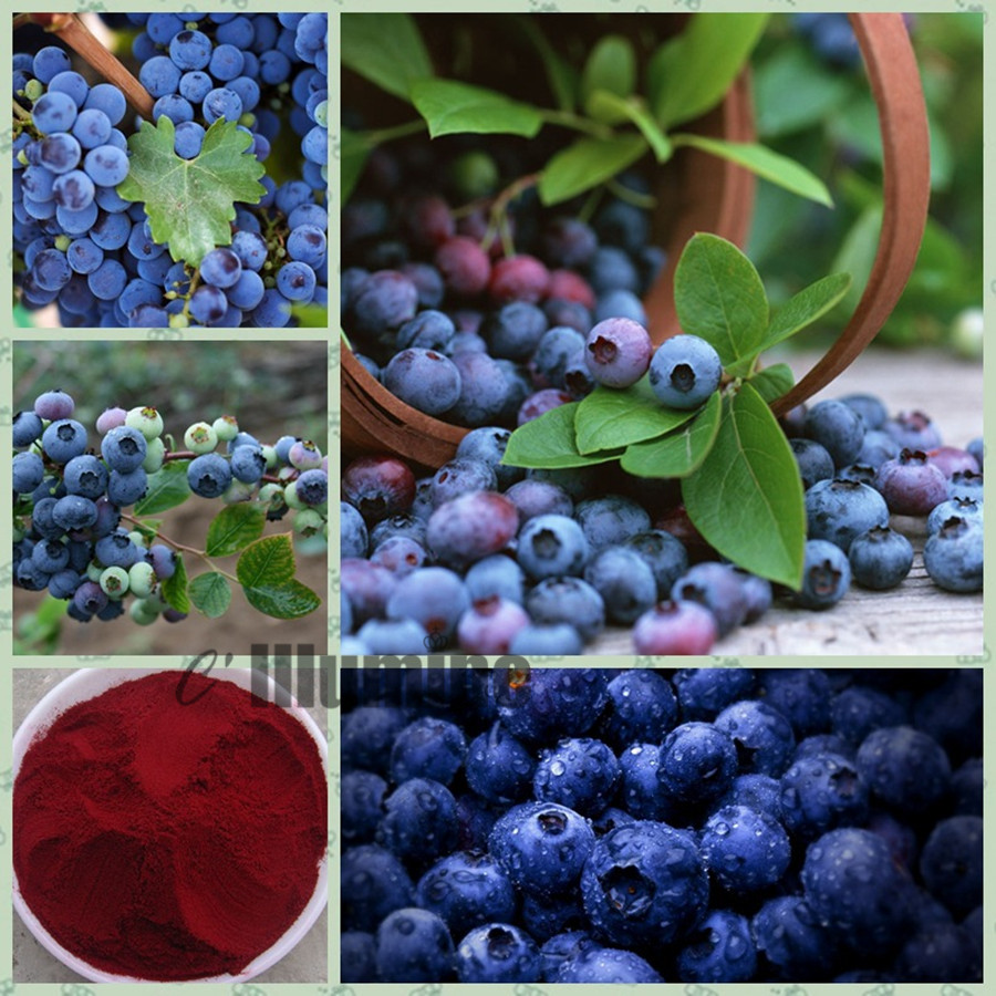 Pure Natural Blueberry Extract  Powder 5% Mask Fruit Juice Beverage Additives Food Grade 1000g 2016 new arrival fashion baby boys kids blazers boy suit for weddings prom formal wine red white dress wedding boy suits
