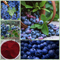 Pure Natural Blueberry Extract  Powder 5% Mask Fruit Juice Beverage Additives Food Grade 1000g