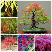 Free Shipping 4 kinds 20pcs Maple Feathers Seeds Canada Maple tree seed Bonsai plant The Budding Rate 90% (Mixed colors),(China)