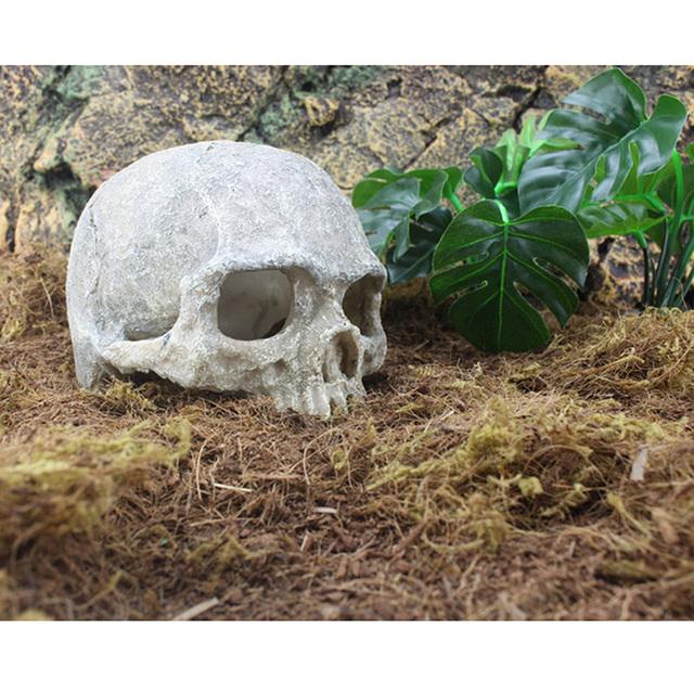 Skull Statue for Lizards in Terrarium or Cave for Aquarium Fish Tank