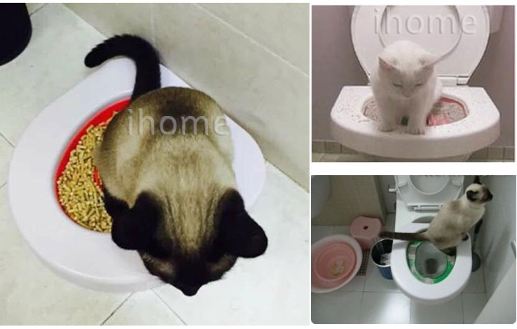 natural cleaning products for cat urine
