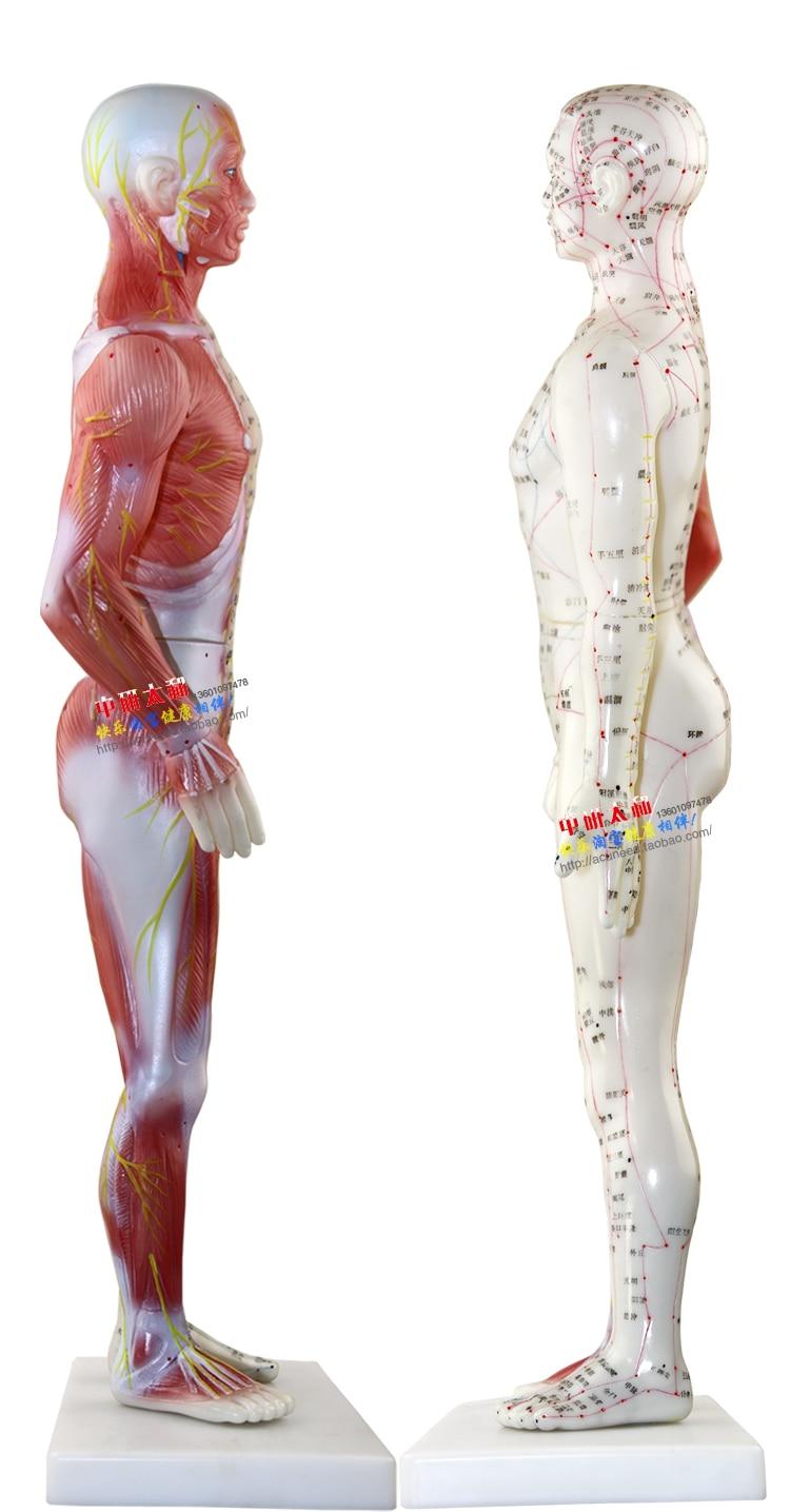 Charmant Sichtbare Körperanatomie Fotos - Anatomie Ideen - finotti.info