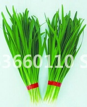 selling 100pcs Large - leaved Chinese chive continuous harvest Warming liver and kidney potted vegetable bonsai Free shipping стоимость