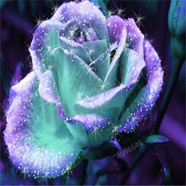 100Pcs-bag-Amazingly-Beauty-Rose-Bonsai-Flower-With-Red-Edge-Seedling-Rare-Color-Popular-Garden-Perennial.jpg_640x640 (2)