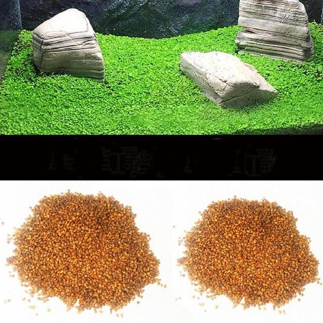 10g/bag Aquarium Grass Seeds Fish Tank Indoor Aquatic Water Plants Decor Rock Lawn Garden Foreground Planting Landscape Ornament 3