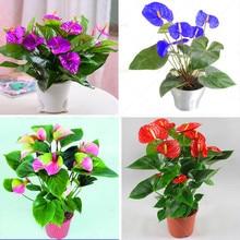 100pcs Bonsai Ανθούρια σπόροι Anthurium andraeanum Linden Araceae πολυετή εσωτερική αειθαλή βότανα σπόροι λουλουδιών για τον κήπο του σπιτιού