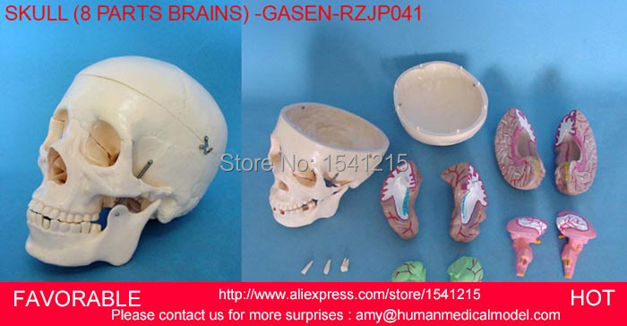 HEAD ANATOMICAL MODEL BRAIN MODEL MEDICAL SCIENCE SUPPLIES,BRAIN ANATOMICAL MODEL,MEDICAL ANATOMICAL TORSO -GASEN-RZJP041 42cm male 13 torso model torso anatomical model of medical biological teaching aids equipment
