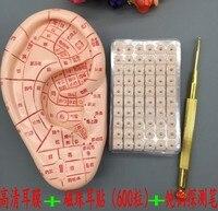 new upgrade ear massage set model english version 12cm Ear Model /ear acupuncture needle pen /600 beads sticker