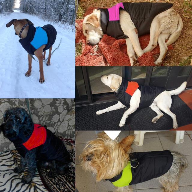Chaqueta Impermeable de Invierno para los Perros